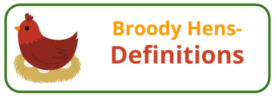 Broody Hen Behaviour & Biology - Edited