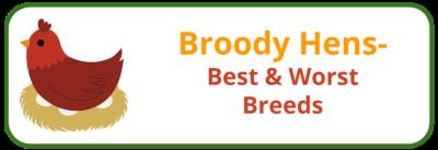 Broody Hen- Best & Worst Breeds - Edited