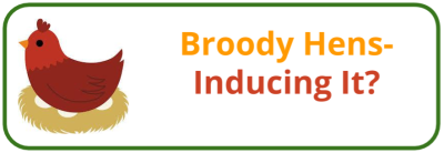 Broody Hen- Encouragement & Inducement - Edited