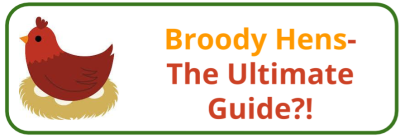 Broody Hen Ultimate Guide - Edited
